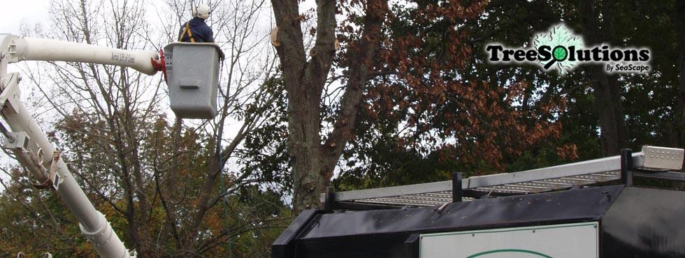 tree-slide