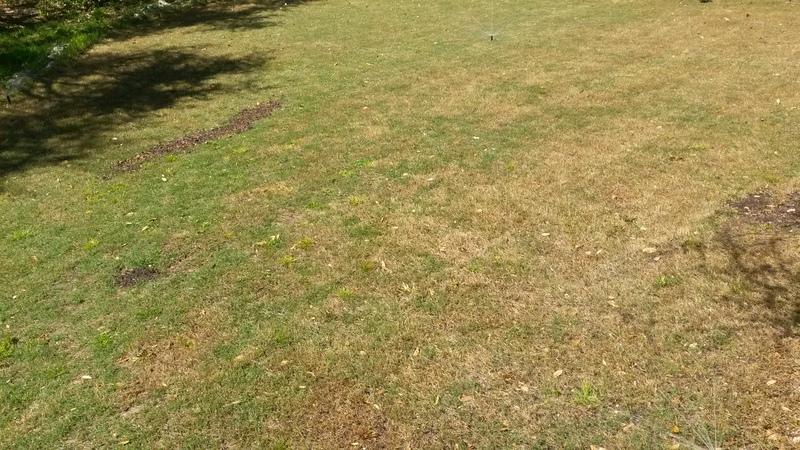 scalped-lawn