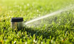 An underground sprinkler head sprays in the morning sunlight